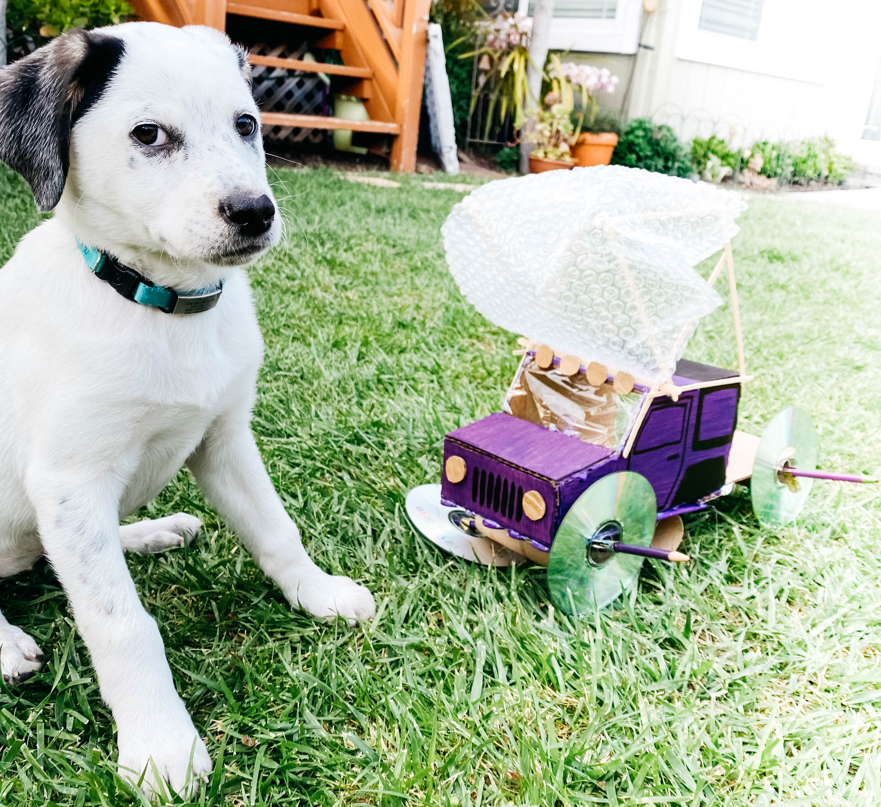 A puppy sits next to a wind-powered delivery device.