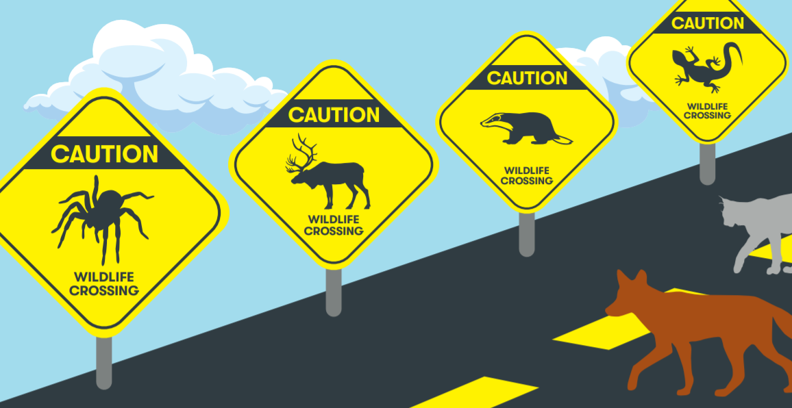Cartoon of coyotes crossing a roadway featuring several yellow caution signs